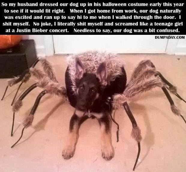 anyone here have a fear of spiders?