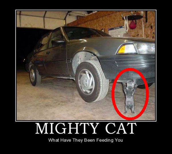 Who Needs Jack Stands When You Have Mighty Cat
