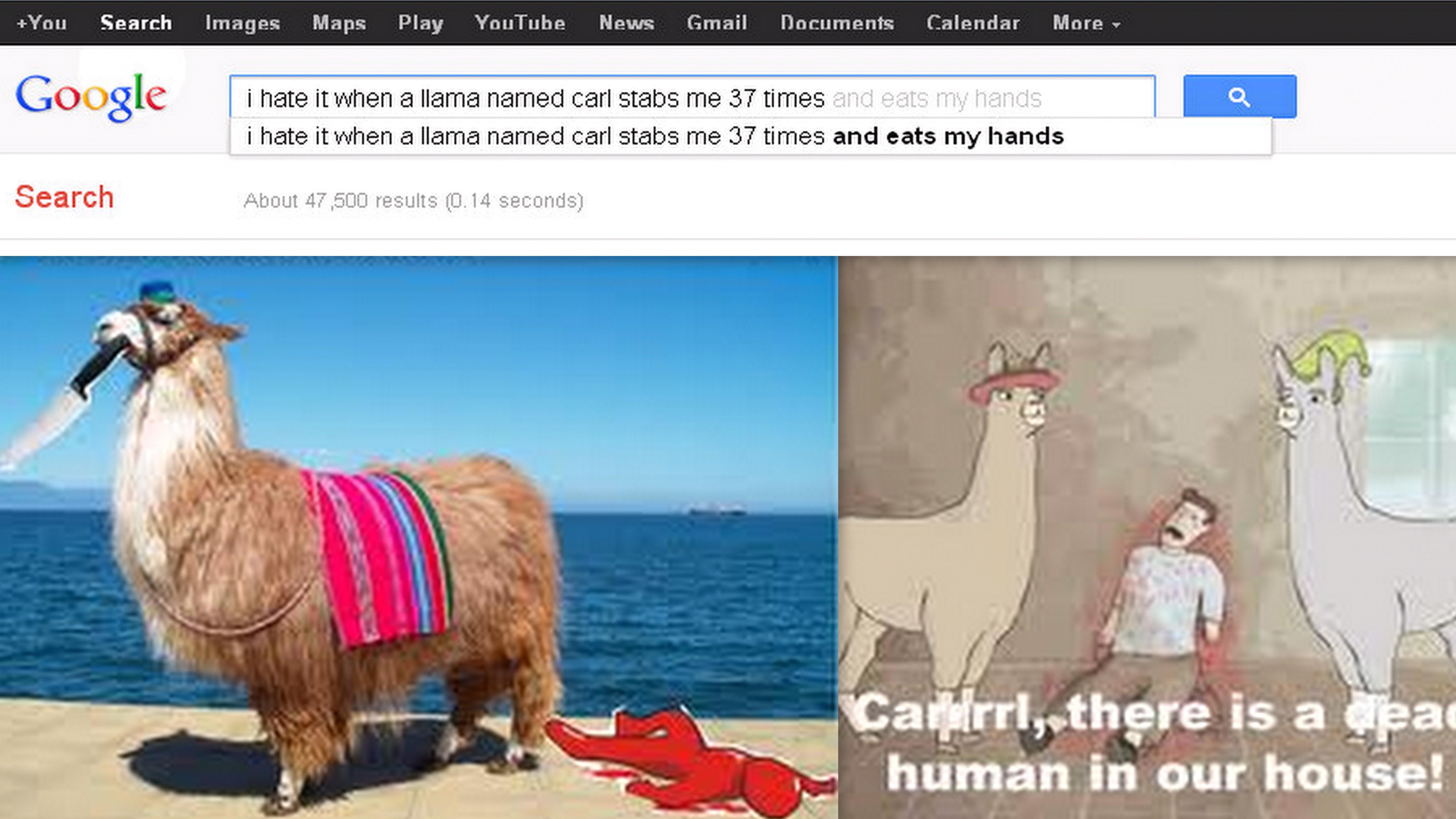 llama named carl