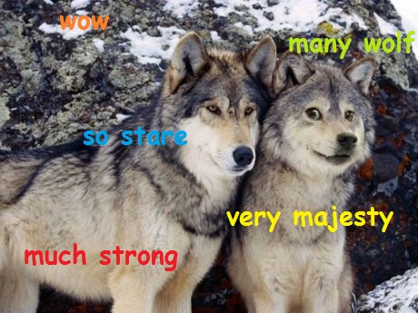 What happens if you cross a wolf with the doge?