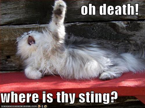 Poetic cat...