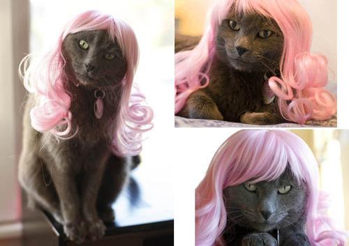 Кот проститутка овидиополь проститутки