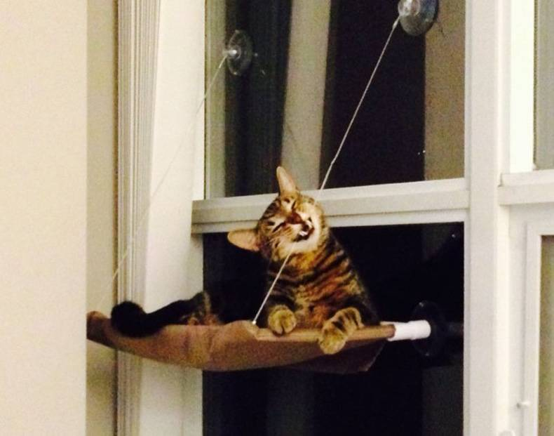 Cat learning the laws of gravity the hard way in 3...2...1...