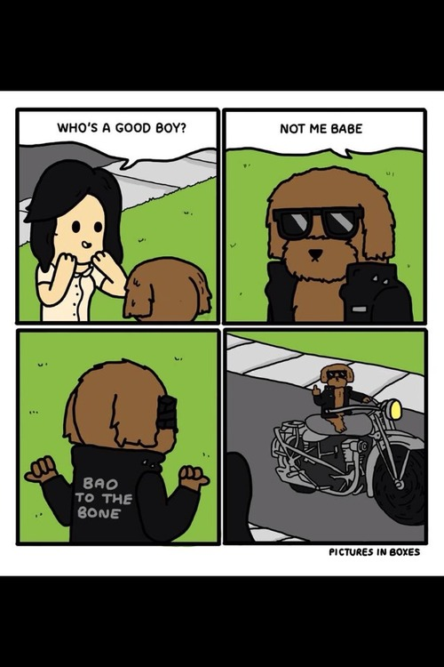 the wrong puppy