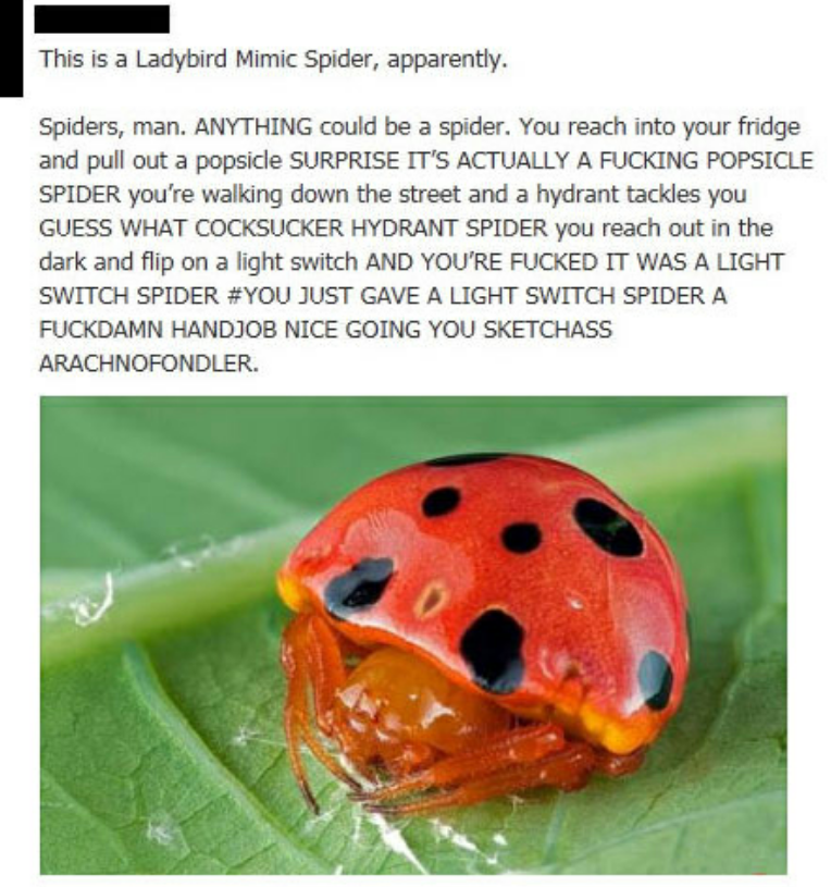 Surprise Spider