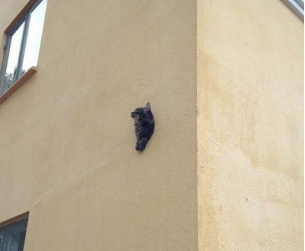 All in all its just another cat in the wall