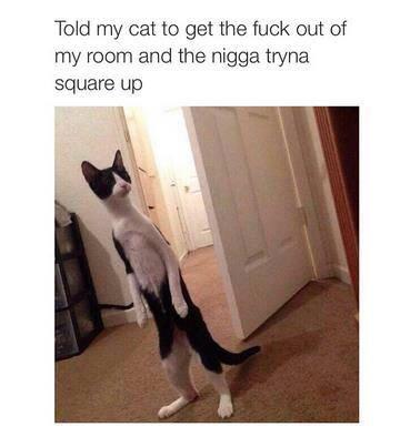 Cat go go pussy