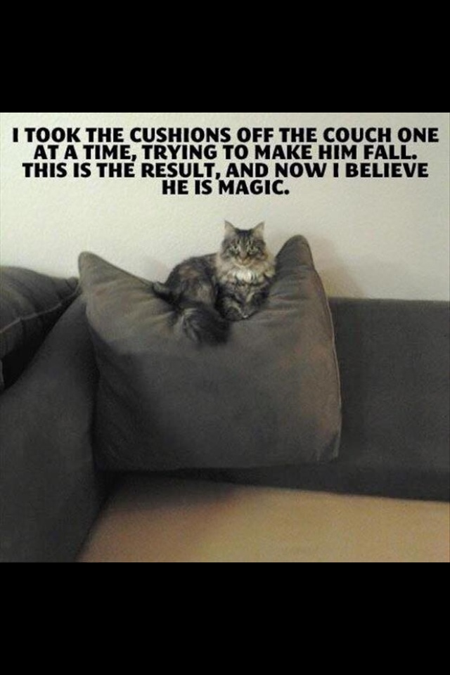 Magic Kitty