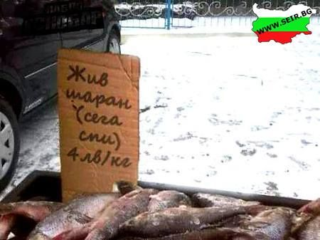 "Translates to ""live carp (currently sleeping)"""