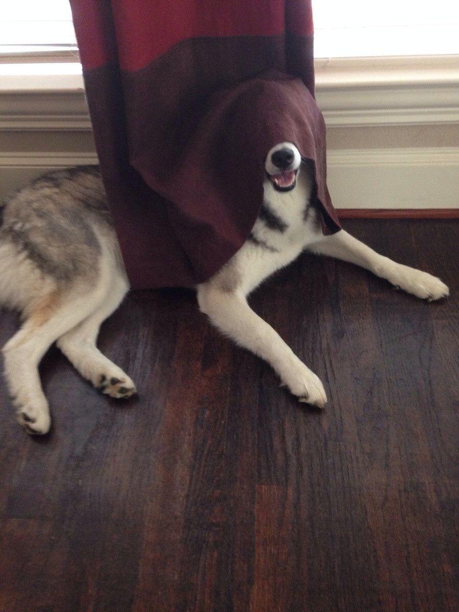 Bark Sidious