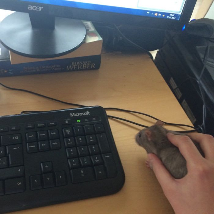 This new mouse isn't working