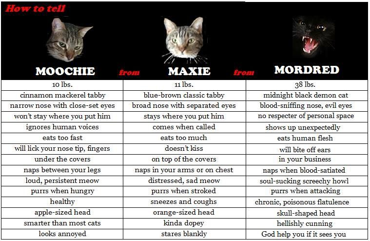 A handy guide my friend made to help houseguests figure out which cat is which.