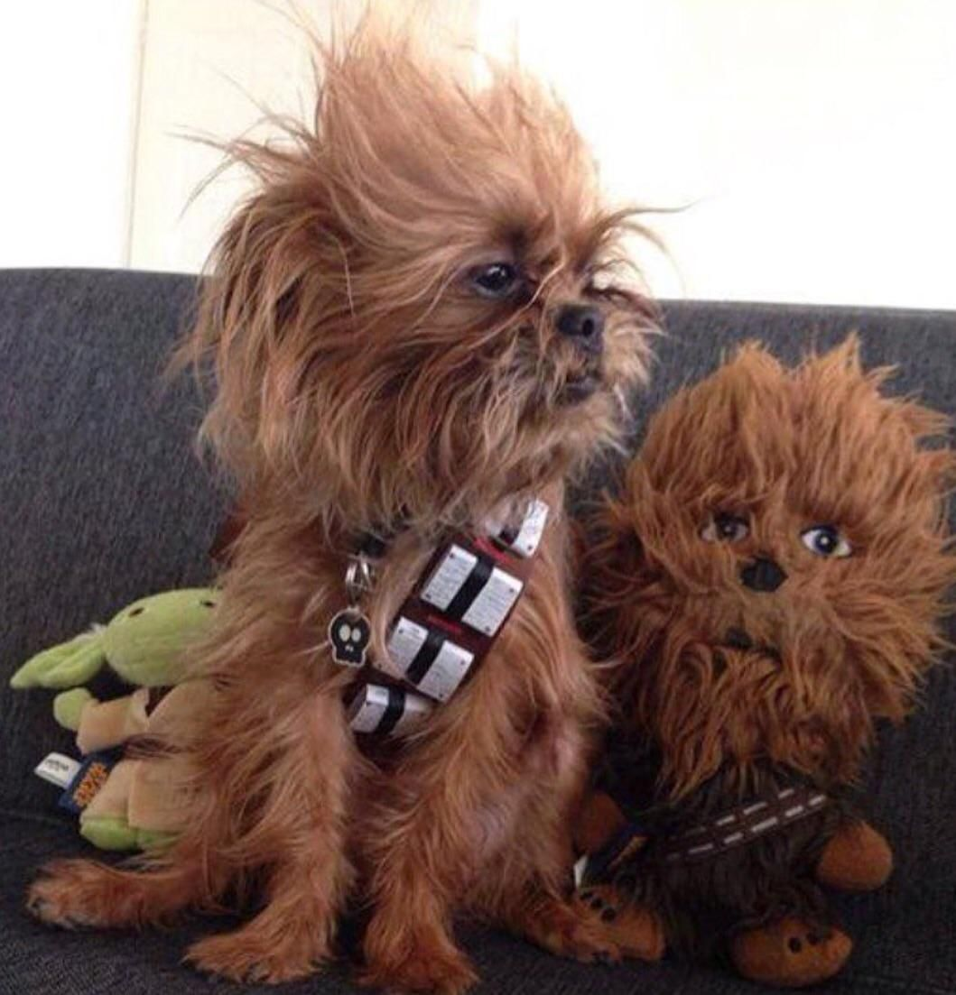 2 Chewbaccas or Two-baccas
