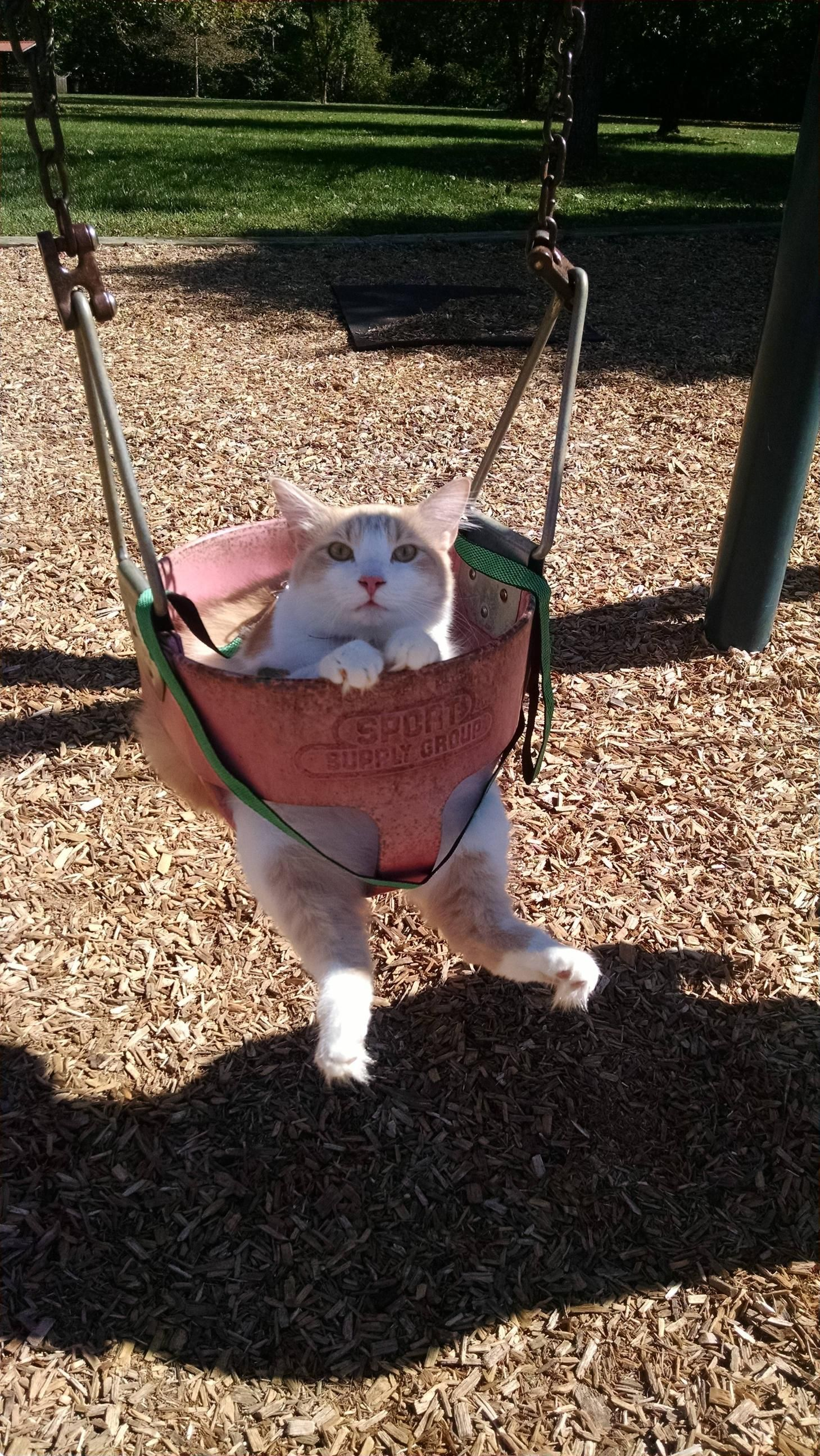 Not only was he swinging, he was on a leash. The most patient cat ever.