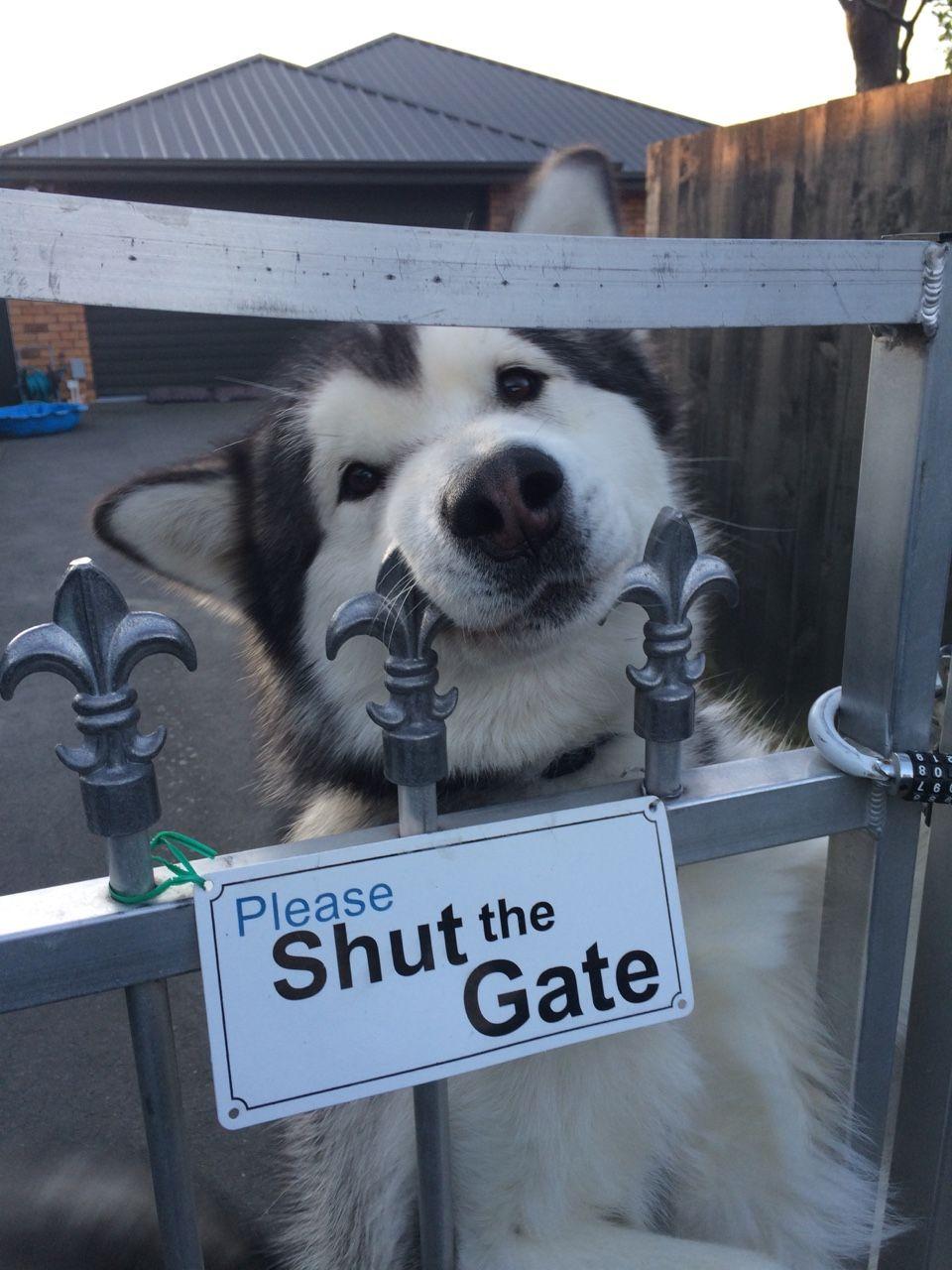 You close gate?
