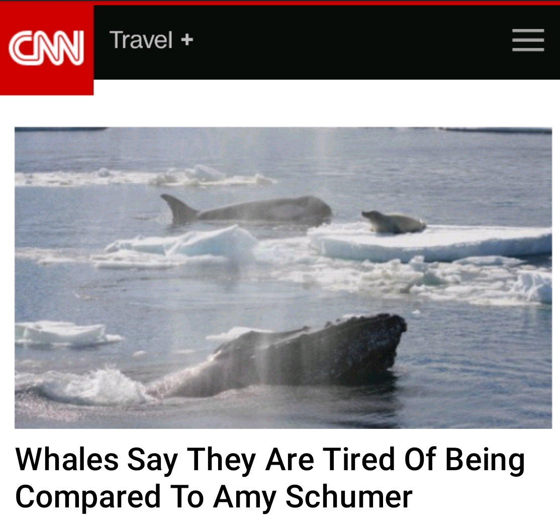 I speak for the whales