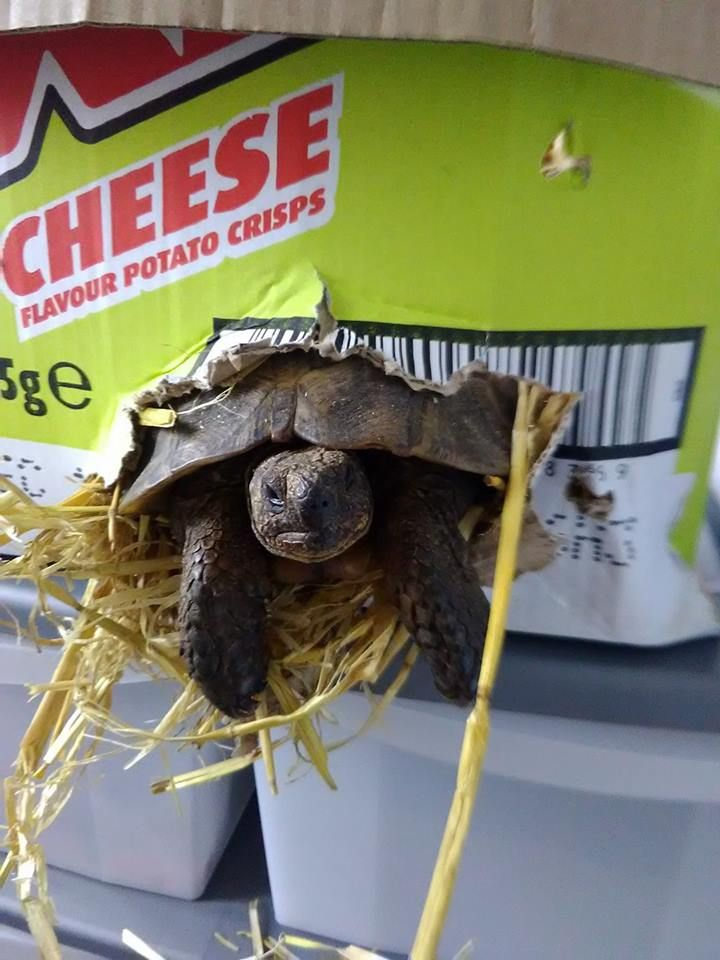 Guess my tortoise is awake from hibernation