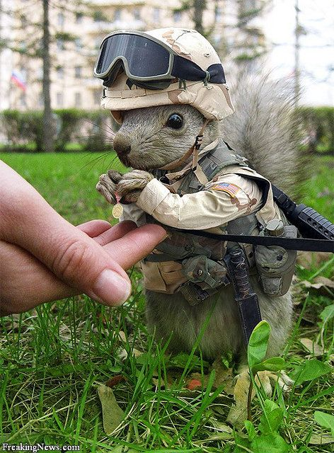 Googled Marine Animal, was not disappointed