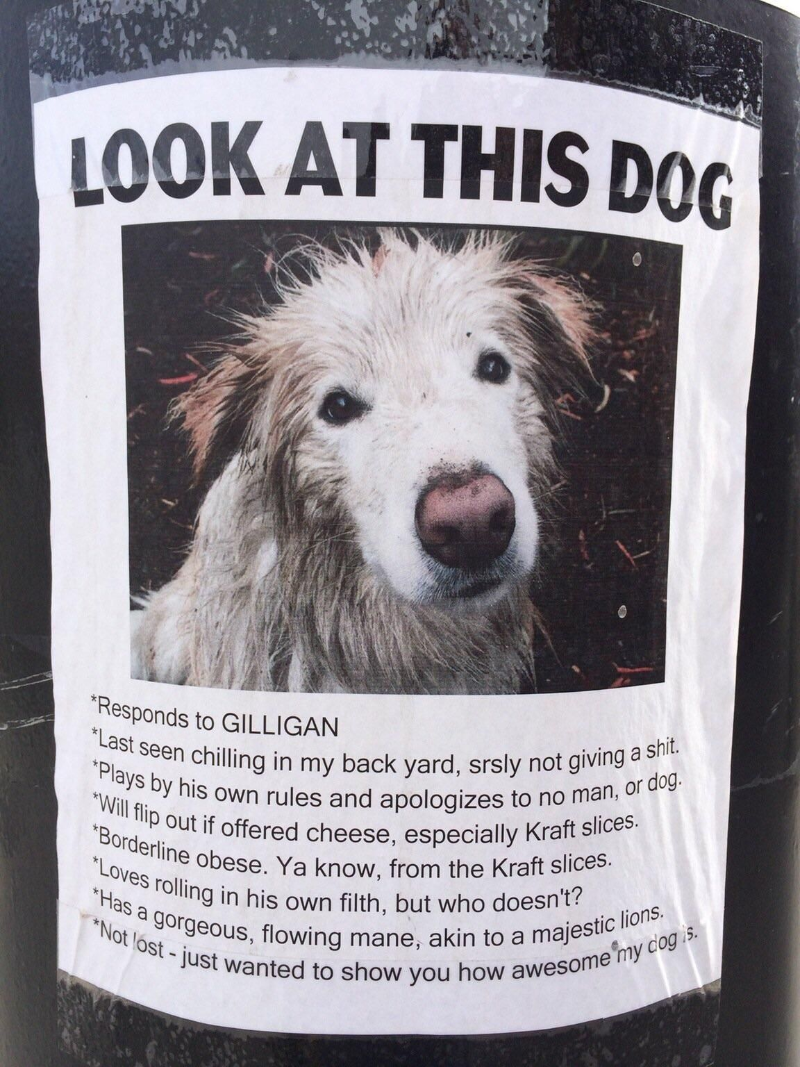 this hilarious  u0026quot lost dog u0026quot  poster i found a couple years ago