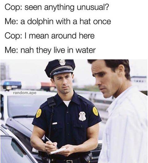 Wierd ass dolphin