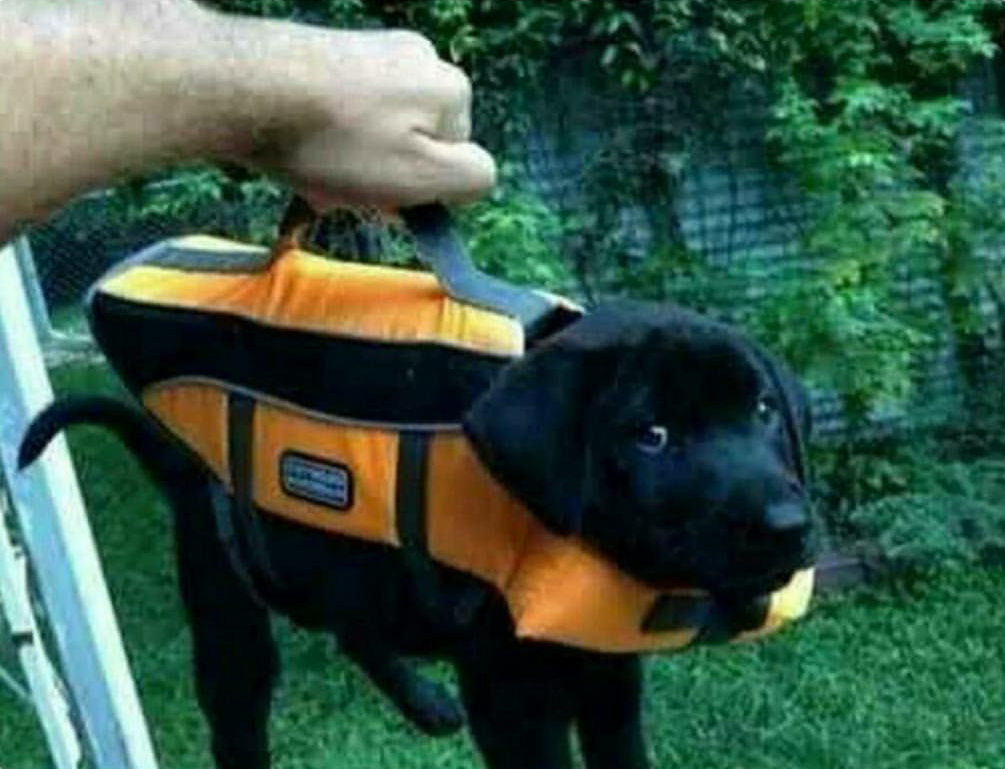 Briefcase containing important lab results.