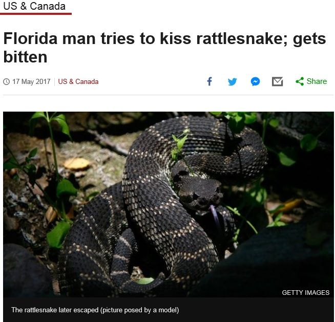The adventures of Florida Man!