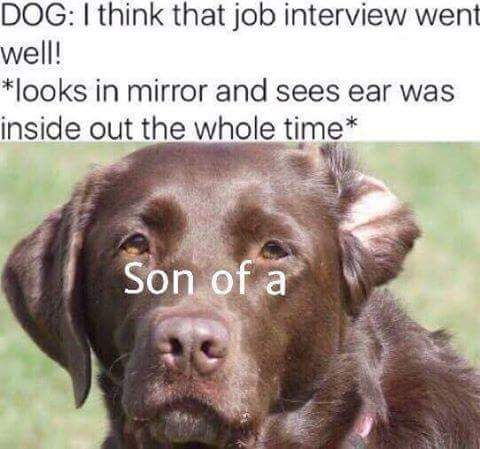 Dog Meme Ear Flipped Inside Out