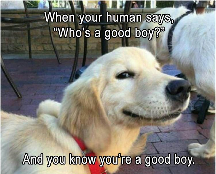 Yeah, I know... I am a good boy!