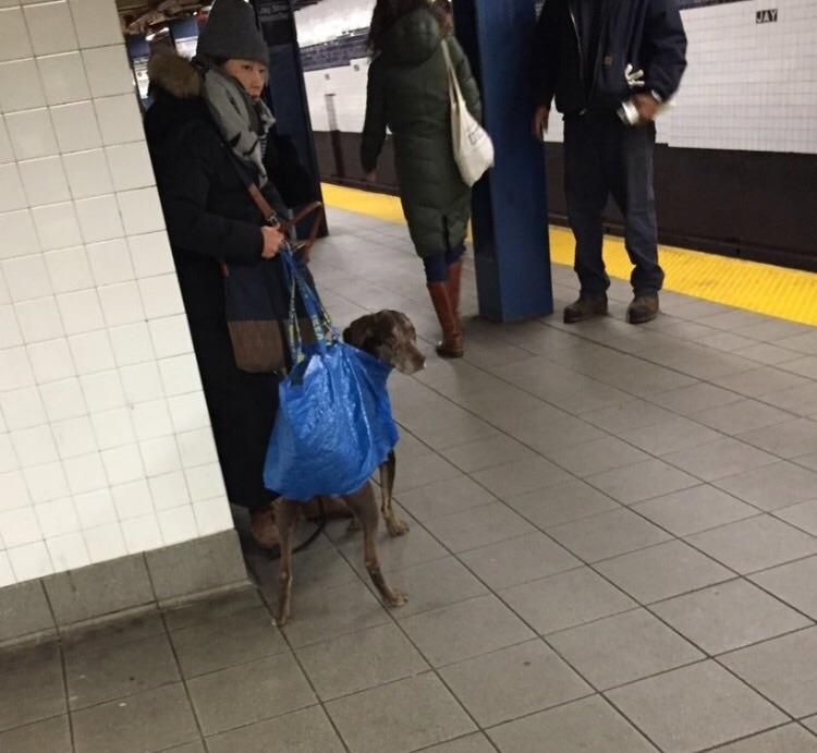 All dogs that cant fit in a bag are banned from the NY subway