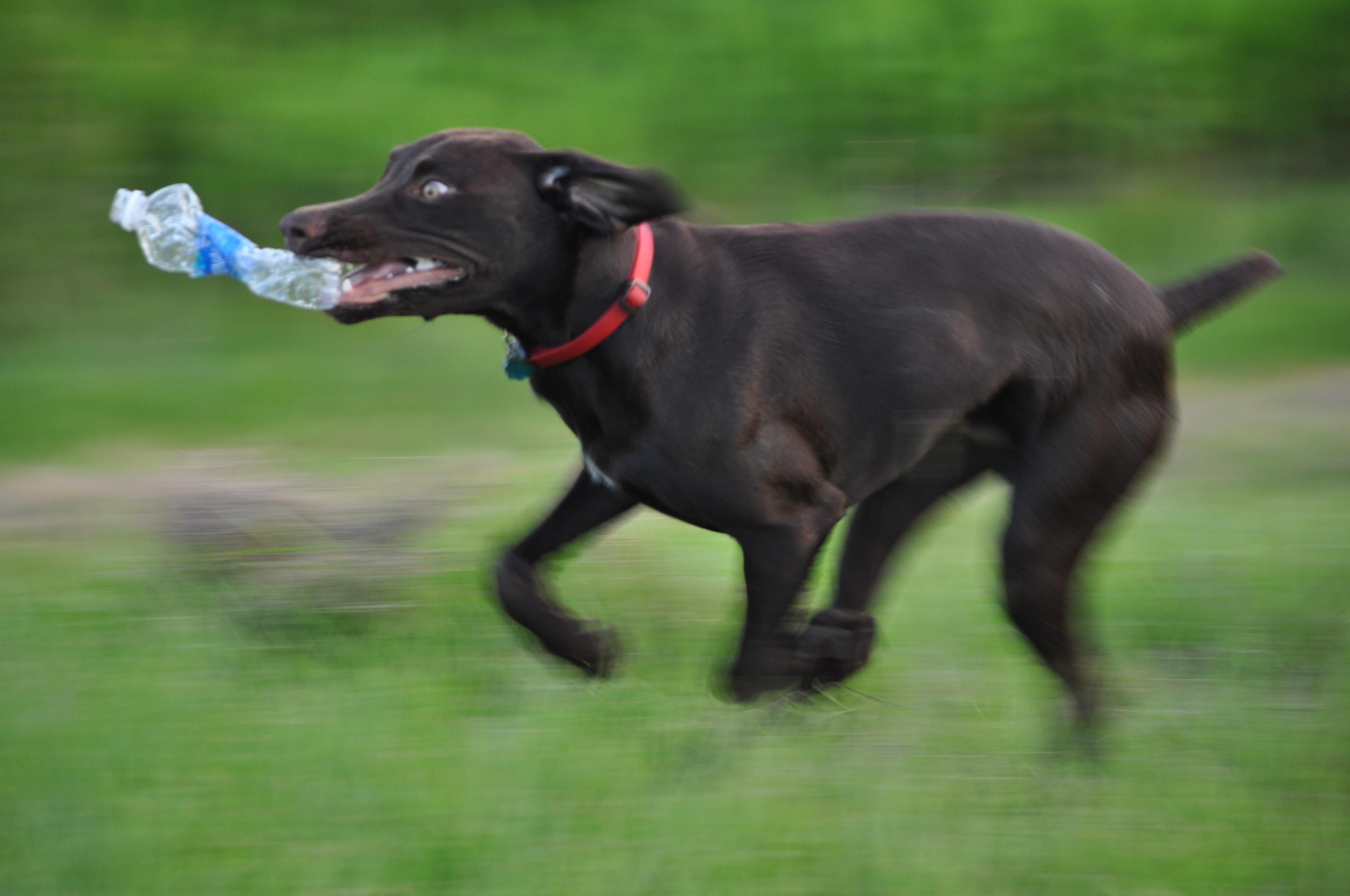 Water bottles are crack for my dog. I was drinking this when he did a fly-by and took off.