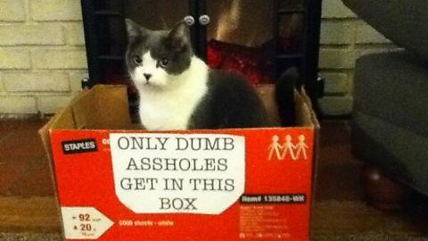 Someone hates cats.