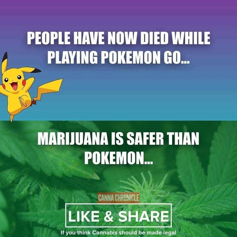 Sent this to my poke-go obsessed, anti pot cousin. She was not impressed.