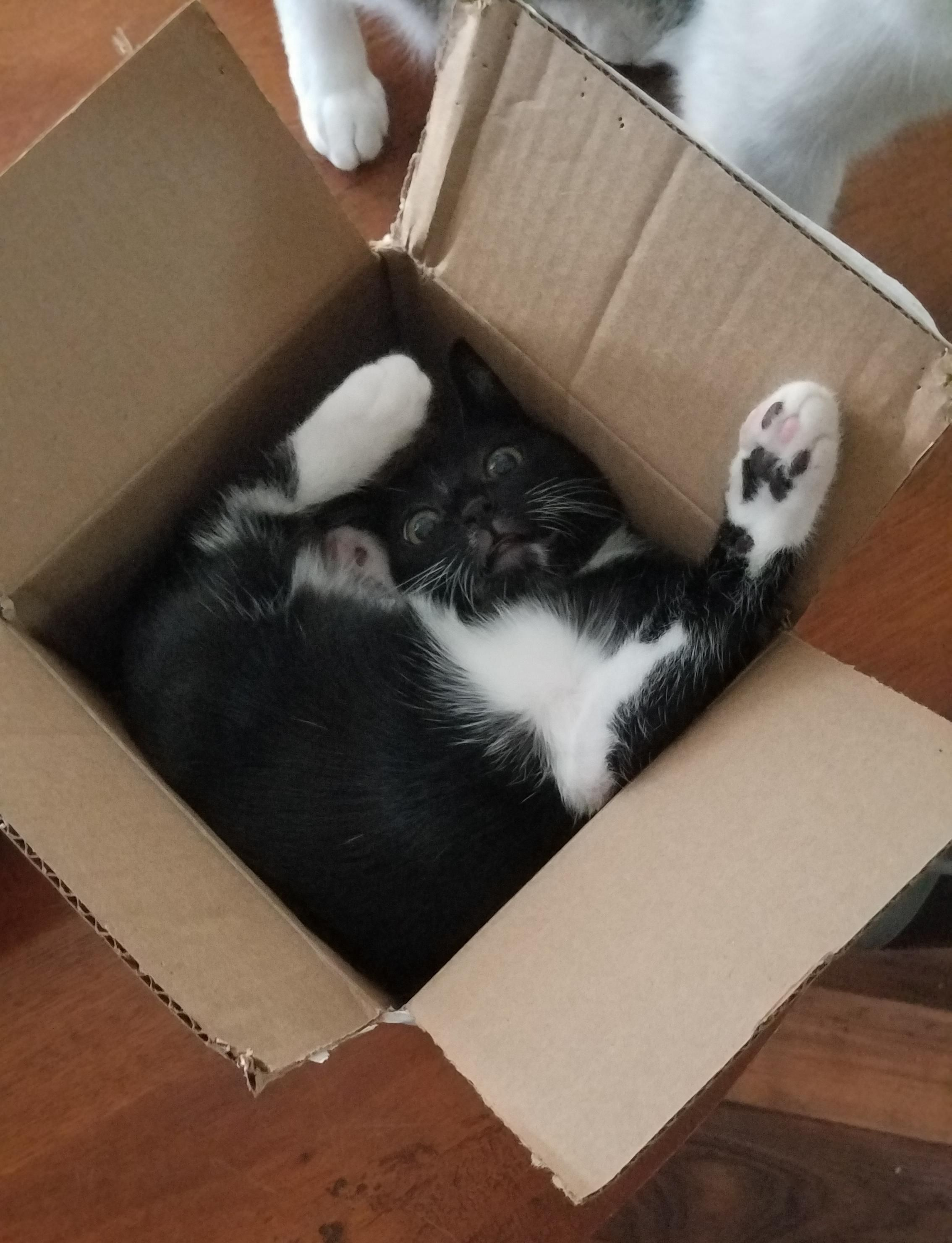 That's one way to sit in a box, I guess.