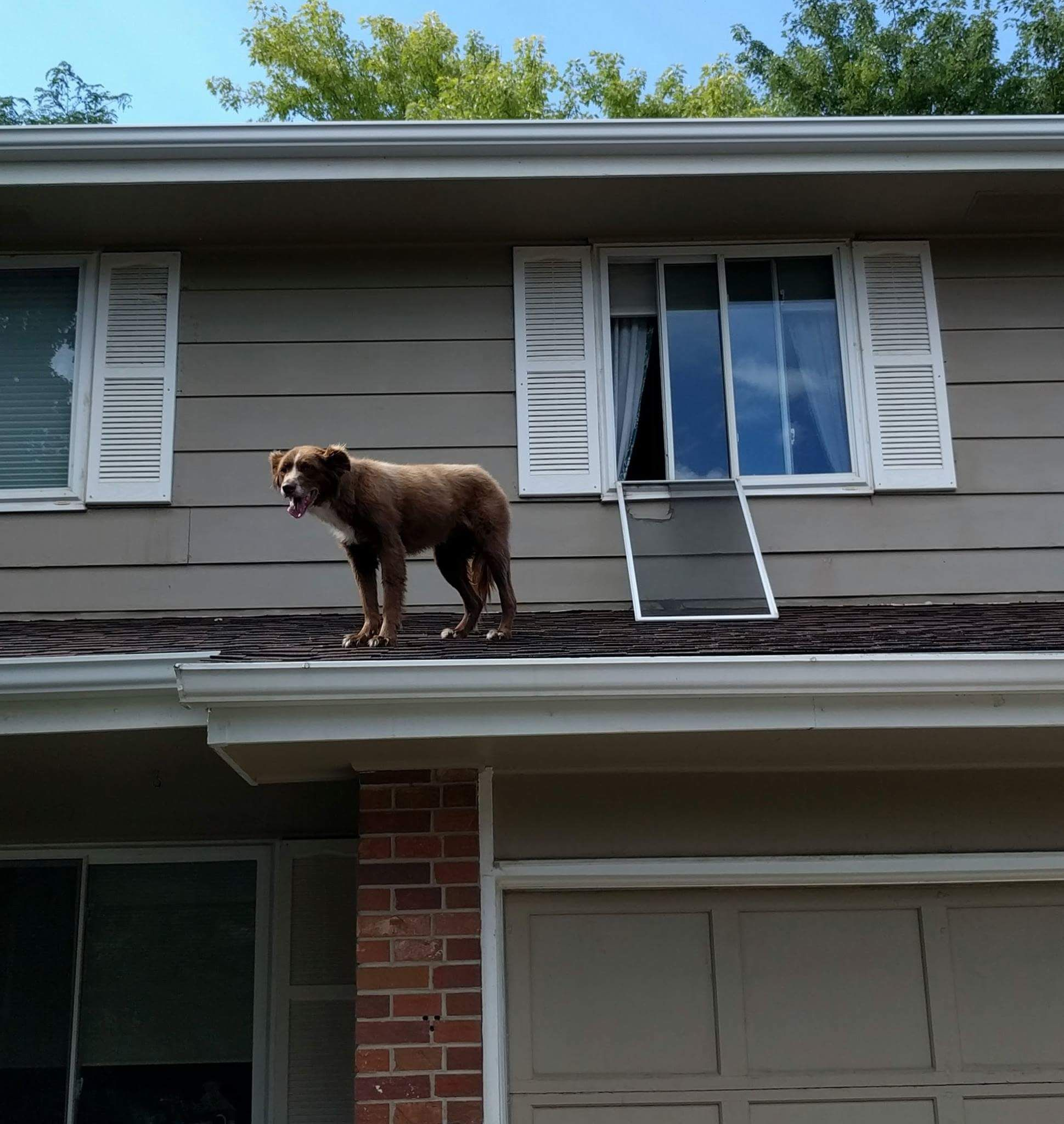 """My dad just sent me this pic of our dog. The neighbors texted him in the middle of the day, """"Your dog is on the roof..."""""""