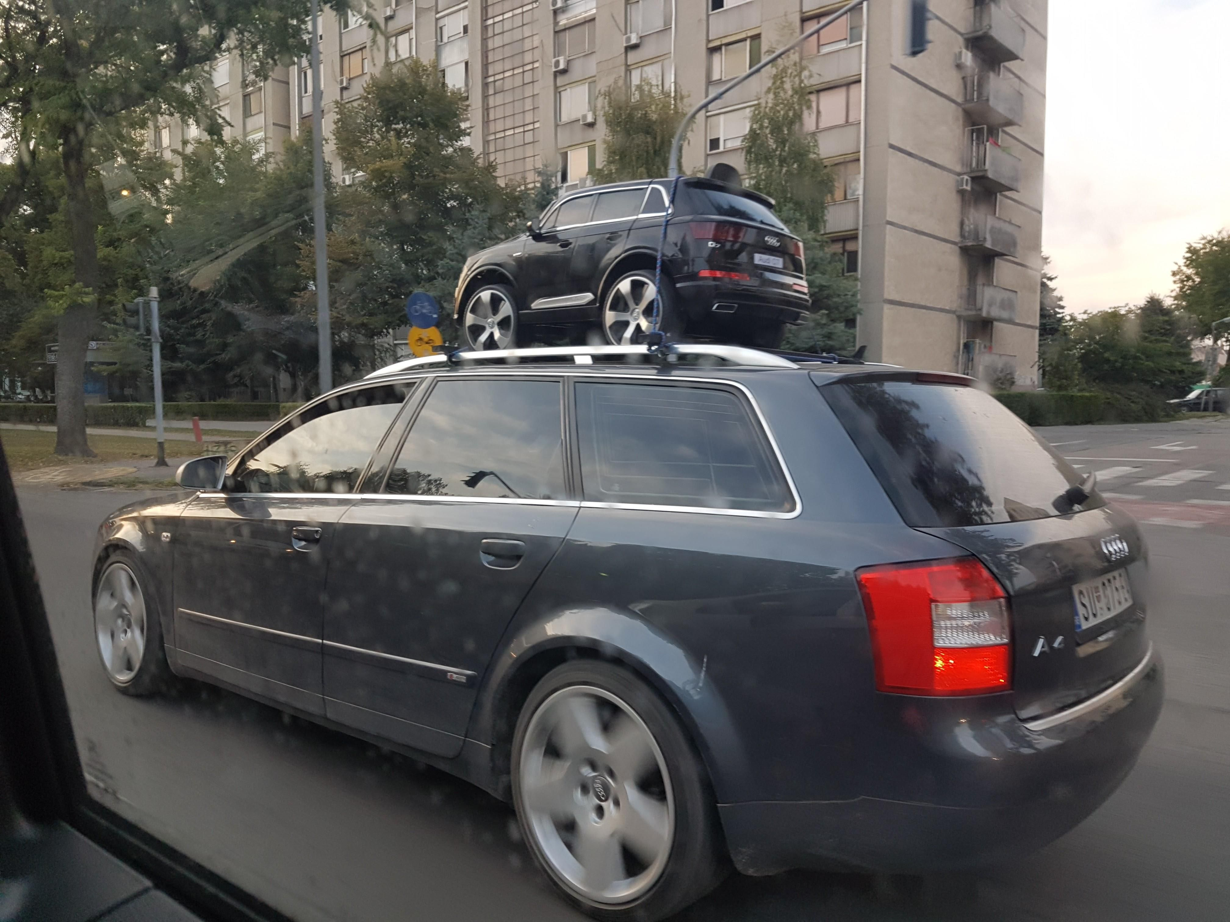 Very rare moment of a mother Audi taking its cub on its first journey