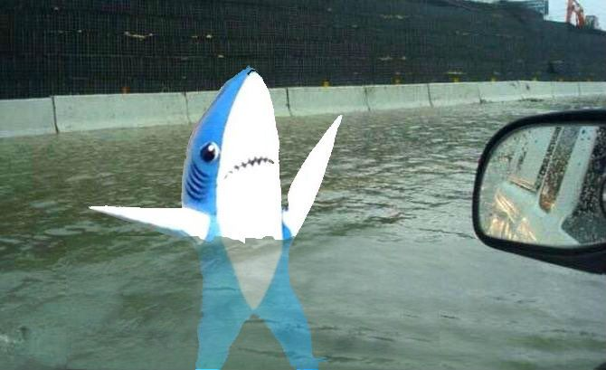 A shark photographed on I-75 just outside of Naples, FL.