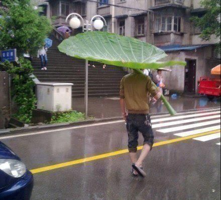 All-natural umbrellas are the best