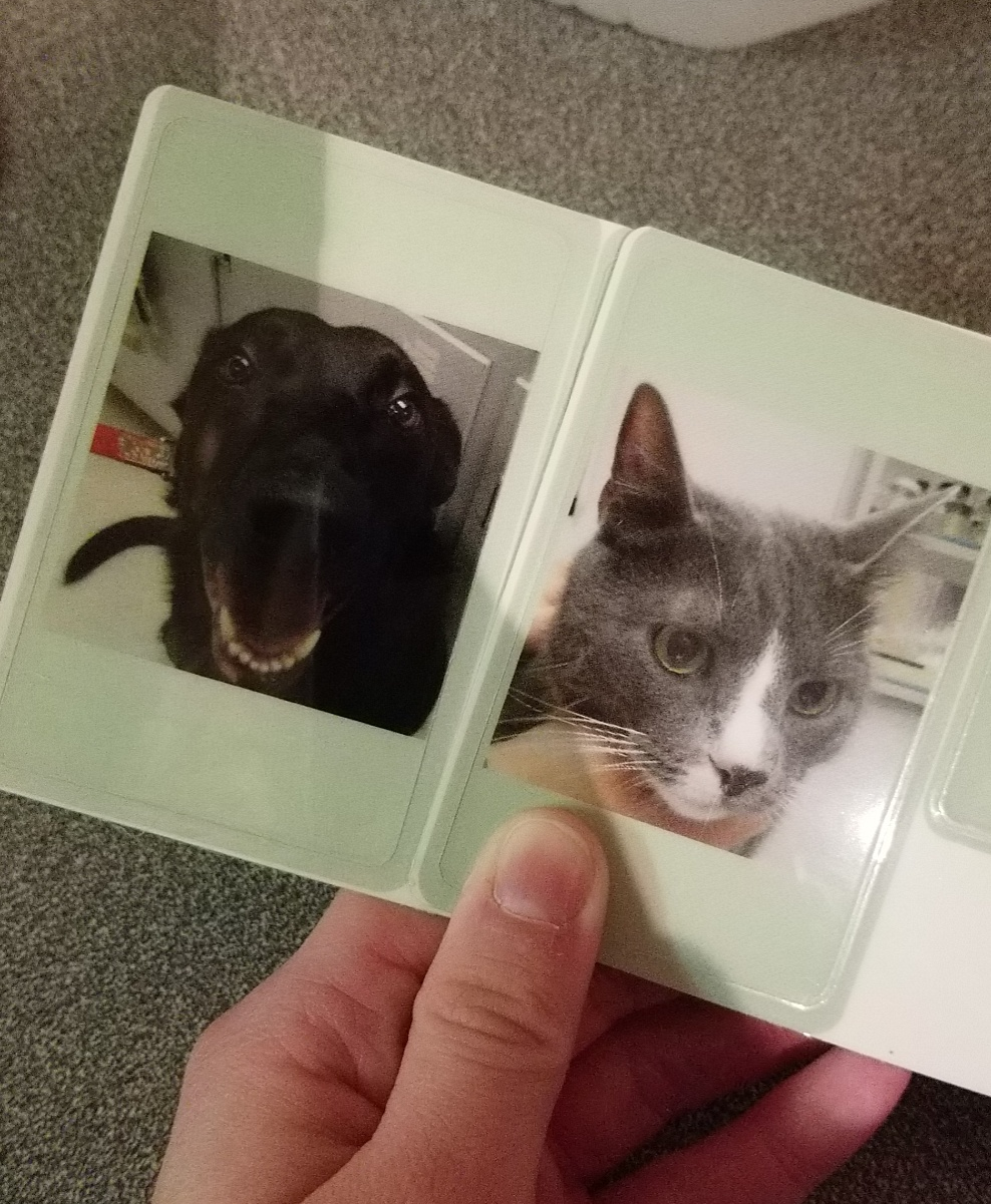 The vet did a perfect job capturing our animals personalities on their ID tags.