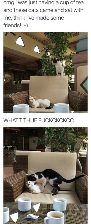 Puss is thicc