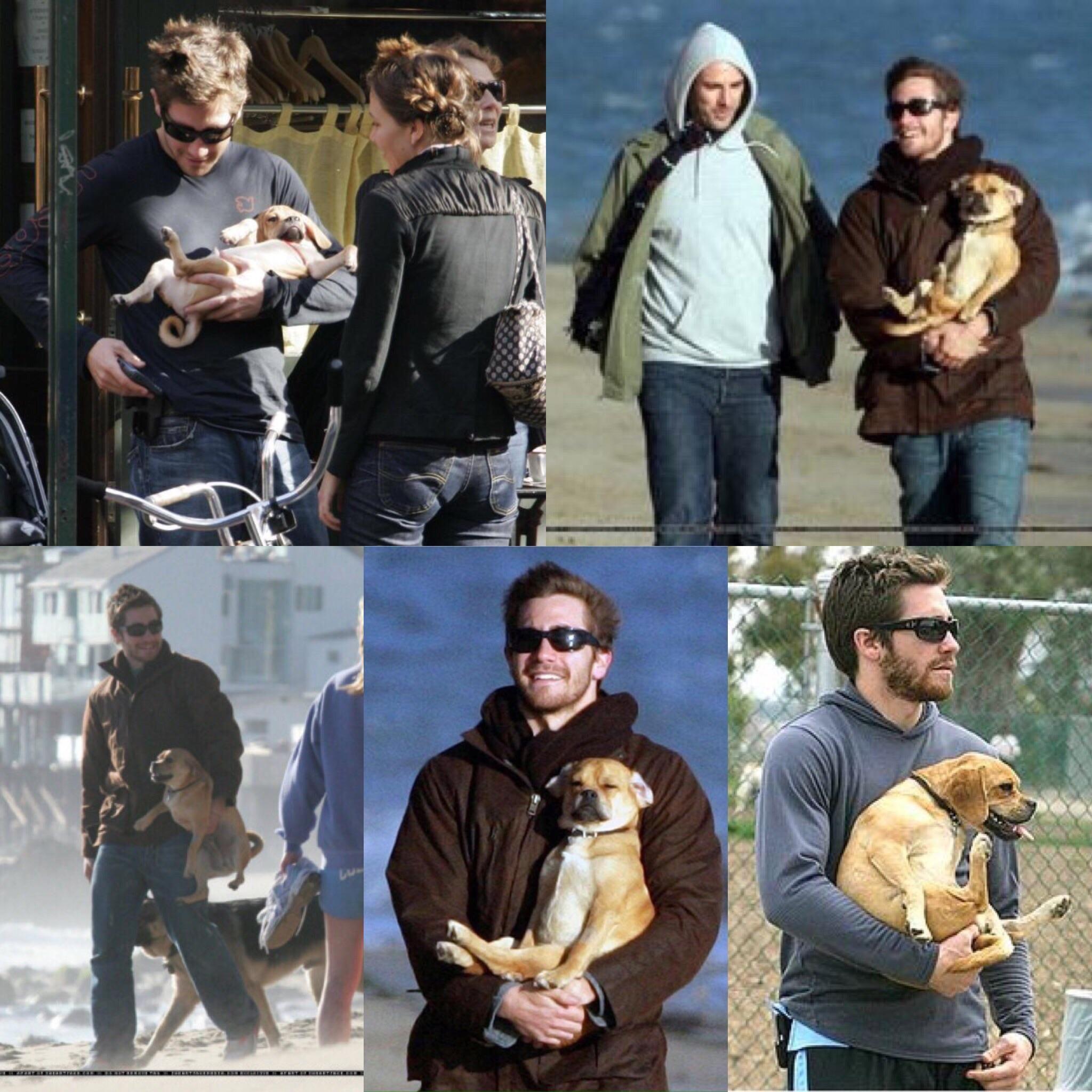 Jake Gyllenhaal incorrectly holding dogs.