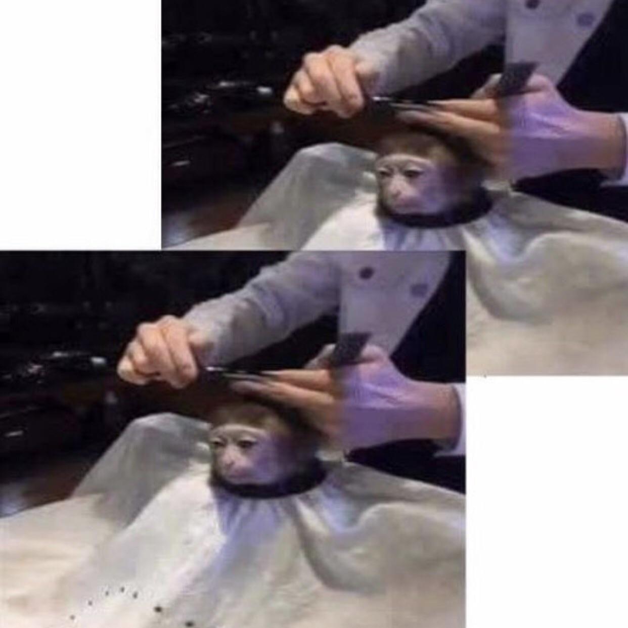 monkey^2