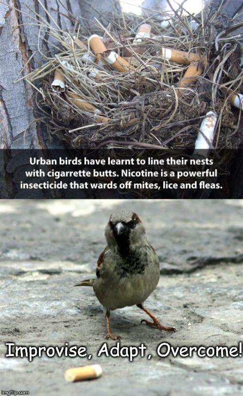 Bird Grylls