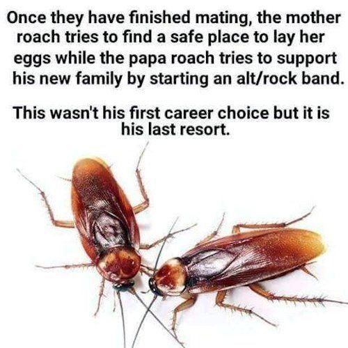TIL of Roach Mating Habits.