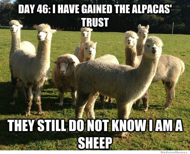 They call me Al Pasheepo.