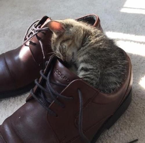 Shoes for scale… and bed