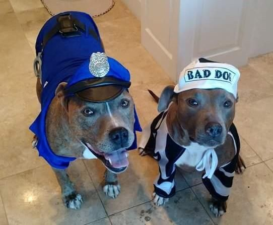 """""""Ma'am, I've caught the alleged """"bad dog"""". May I trouble you for a cup of water and a cookie?"""""""
