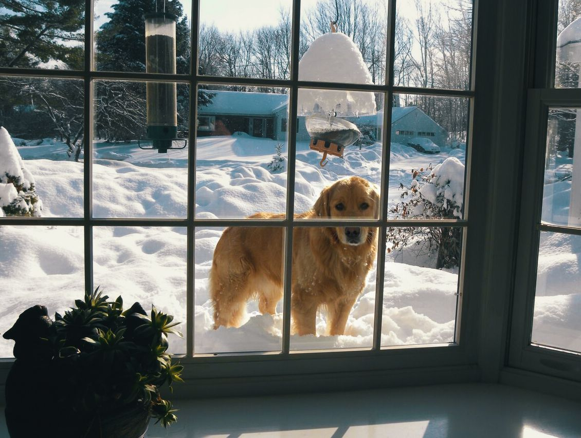 We have received so much snow recently that my dog can just look in the window when he wants to come in...