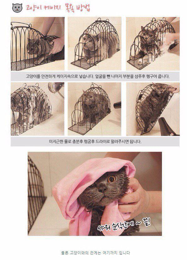How to wash your cat easily.