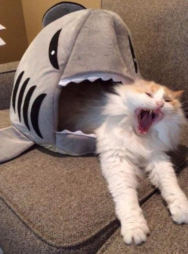 Jaws vs. Paws
