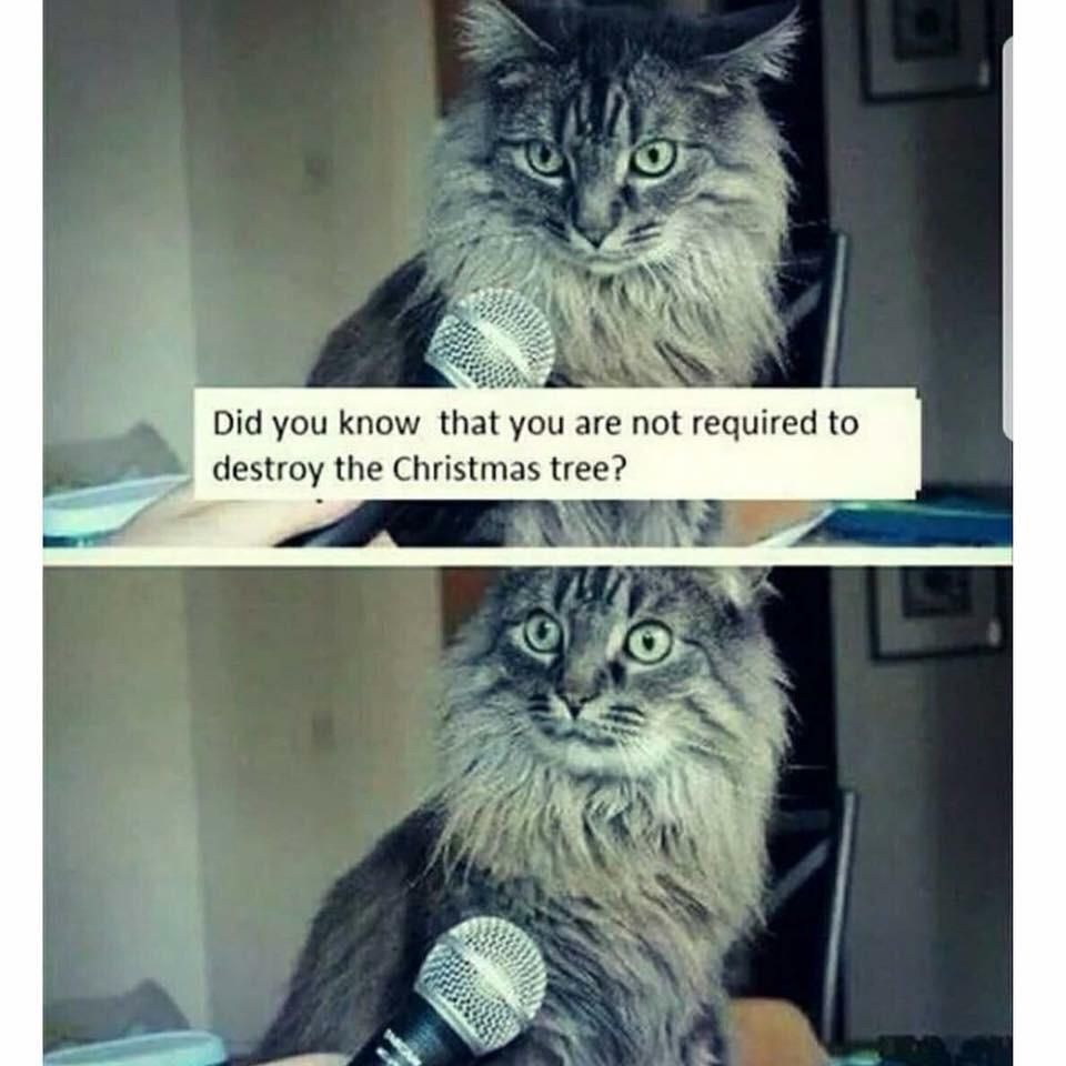 My cat has the same reaction when I ask it this question.